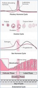 femalehormones