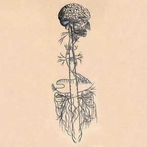 09-vagus-nerve.w700.h700.2x